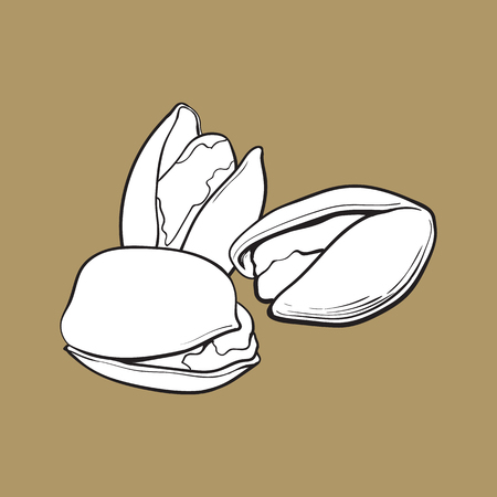 Group of black and white pistachio nuts, shelled and unshelled, sketch style vector illustration isolated on brown background. Realistic hand drawing of pistachio nuts Illustration