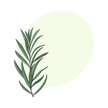 Beautiful hand drawn melaleuca twig, branch,floral decoration element, sketch vector illustration with space for text.