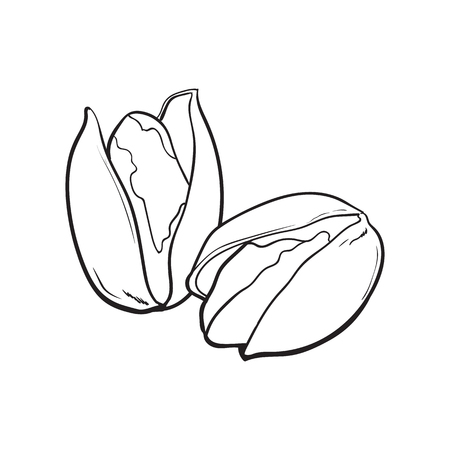 Two black and white pistachio nuts, hand drawn sketch style vector illustration isolated on white background. Realistic hand drawing of pistachio nuts, vegetarian snack Illustration
