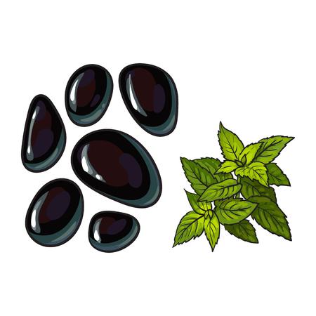 검은 현무암 마사지 돌과 민트 잎, 스파 살롱 장식 요소, 흰색 배경에 벡터 일러스트 레이 션을 스케치합니다. 뜨거운 돌에 대 한 현무암 돌의 현실적인