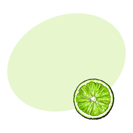 Top view round slice, half of ripe green lime, sketch style vector illustration with space for text. Hand drawn lime cut in half, round slice Illustration