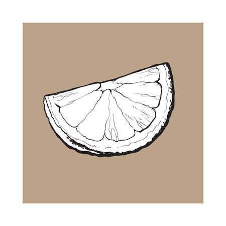 분기, 세그먼트, 잘 익은 라임, 손으로 그린 스케치 스타일 벡터 일러스트 레이 션 갈색 배경. unpeeled grapefruit qurter의 손 그리기, 조각 일러스트