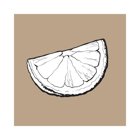 Quarter, segment, piece of ripe lime, hand drawn sketch style vector illustration on brown background. Hand drawing of unpeeled grapefruit qurter, piece