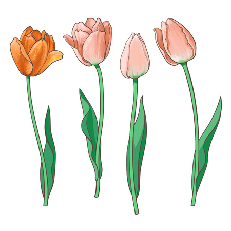Hand drawn set of side view red, orange open and closed tulip flower, sketch style vector illustration isolated on white background. Realistic hand drawing of tulip flowers, decoration element