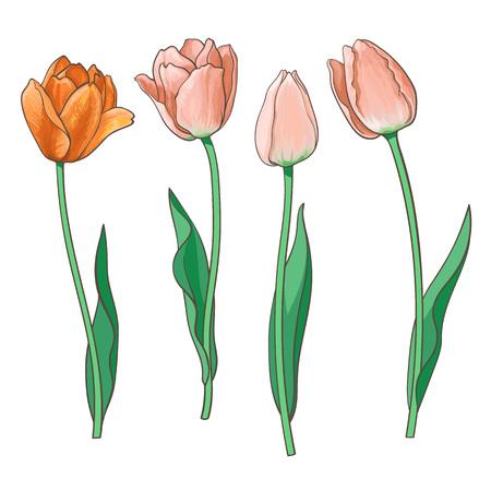 Hand getrokken set van zijaanzicht rood, oranje open en gesloten tulp bloem, schets stijl vectorillustratie geïsoleerd op een witte achtergrond. Realistische handtekening van tulpenbloemen, decoratieelement
