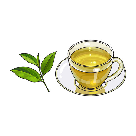 Transparent glass cup, saucer and fresh green tea leaf, sketch vector illustration isolated on white background. Hand drawn glass mug and saucer set with green tea leaf Illustration