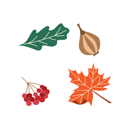 Vector set of thanksgiving autumn symbols - onion, oak and maple leaves, cranberry. Flat illustration isolated on a white background. Cartoon Sign of thanksgiving, autumn, harvest.