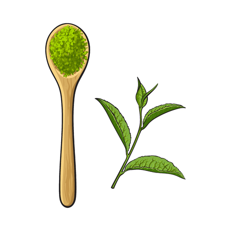Top view drawing of bamboo, wooden spoon with matcha green tea powder and leaf, sketch style vector illustration isolated on white background. Realistic hand drawing of matcha green tea powder Ilustração