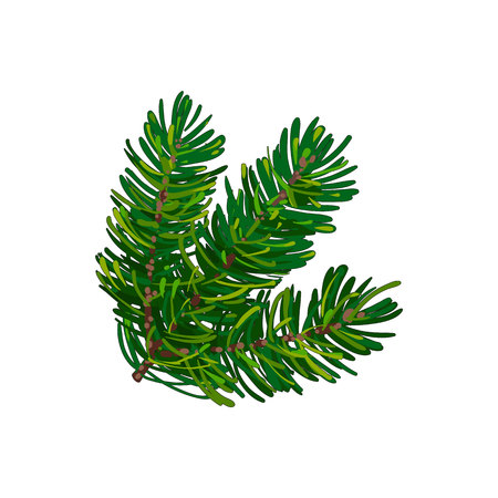 Hand drawn triple fir tree twig, branch, spruce, Christmas decoration element, sketch style vector illustration on white background. Bushy fir tree twig, branch, hand drawn sketch style illustration
