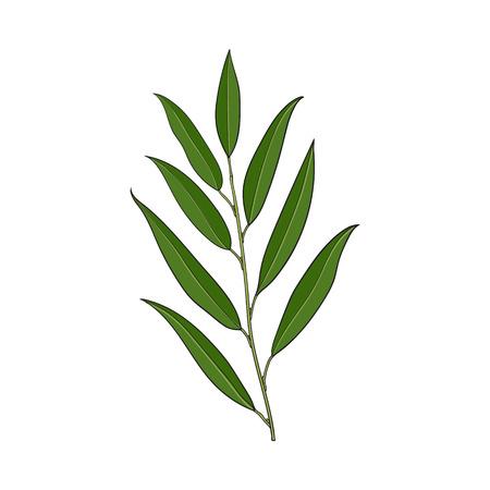 美しい手は、柳の木の枝、枝、装飾要素、白い背景で隔離のスケッチ ベクトル図に描画されます。リアルな手描きの美しい柳の小枝、花の装飾要素  イラスト・ベクター素材