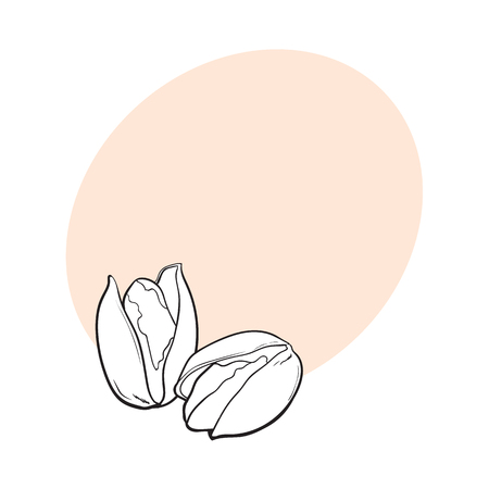 Two black and white pistachio nuts, hand drawn sketch style vector illustration with space for text. Realistic hand drawing of pistachio nuts, vegetarian snack