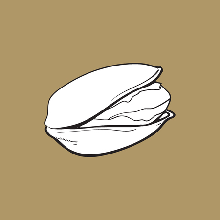 Single black and white pistachio nut, hand drawn sketch style vector illustration isolated on brown background. Realistic hand drawing of pistachio nut, vegetarian snack