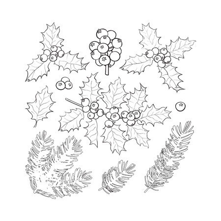 christmas tree illustration: Set of black and white fir tree and mistletoe branches with leaves and berries, Christmas decoration elements, sketch vector illustration on white background.