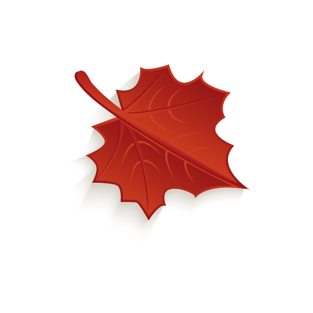 Cartoon autumn fallen maple leaf icon isolated.