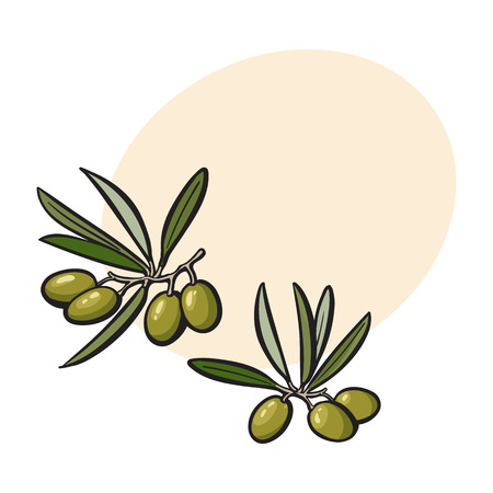 Olives sketch style vector illustration on white background. Realistic hand drawing of olives with space for text.