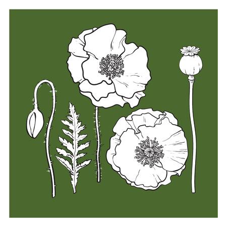 サイド、トップの手描きのセットはケシの花、蕾、ポッド、葉を表示、分離ベクトル図をスケッチします。現実的な手にポピー、春、夏の装飾要素  イラスト・ベクター素材