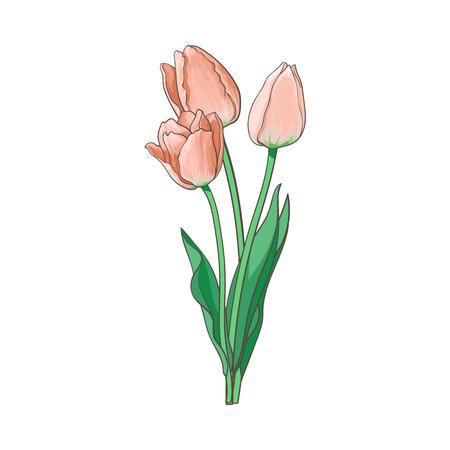 ベクトル チューリップは、白い背景に隔離された図を設定します。開かれた咲く花と花束、幹、現実的な手描きサイド ビューを離れます。春、愛と  イラスト・ベクター素材
