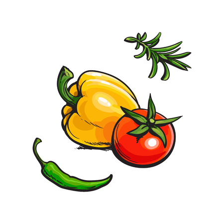 Whole ripe tomato, bell and chili pepper, rosemary - bbq spices set, sketch style vector illustration on white background. Realistic hand drawing of whole ripe tomato, chili, bell pepper, rosemary