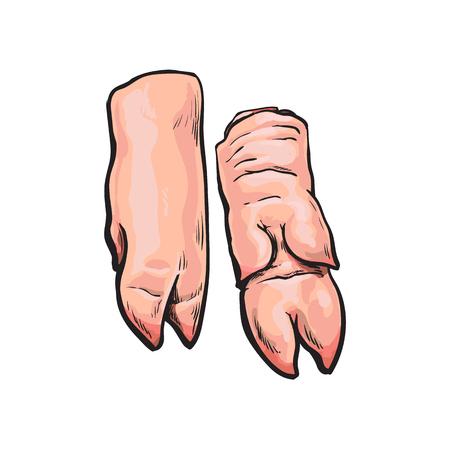 vector varkensvlees ruwe gesneden benen vlees schets. Geïsoleerde illustratie op een witte achtergrond. Handgetrokken varkensvlees