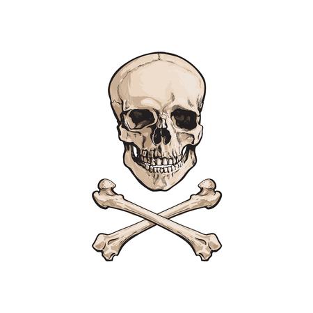 벡터 만화 두개골과 간 뼈 격리 된 그림 흰색 배경에. 졸리 로저 플래그, 해적 모험, 보물 위험과 죽음의 상징