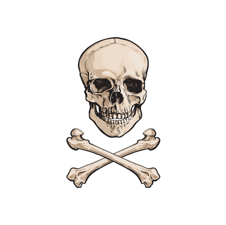 vector cartoon skull and cross bones isolated illustration on a white background. Jolly roger flag, pirates adventure , treasure risk and death symbol Ilustracja