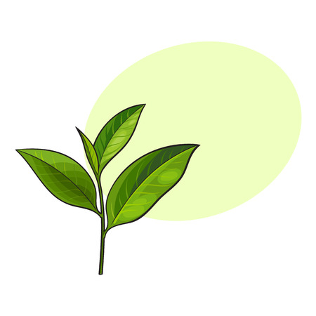 Hand drawn fresh green tea leaf, bud, twig, sketch style vector illustration isolated on white background with speech bubble Illustration