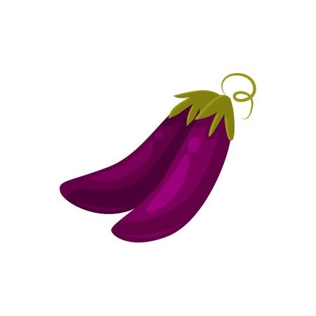 Cartoon style eggplant, aubergine vegetables, vector illustration isolated on white background. Two cartoon style raw whole eggplant, aubergine vegetables, farm product