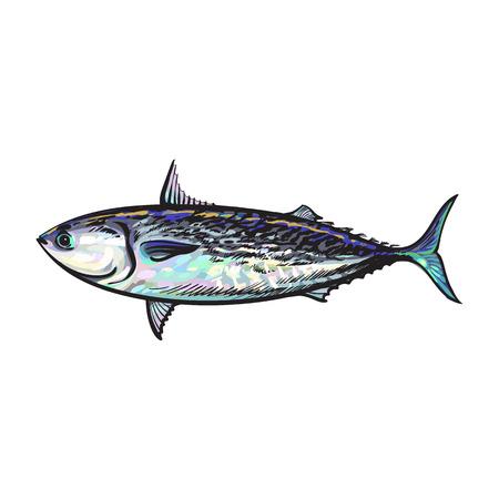 Vektor Skizze Cartoon Seefisch Thunfisch. Getrennte Abbildung auf einem weißen Hintergrund. Meer Delikatesse Lebensmittelkonzept Standard-Bild - 84404981