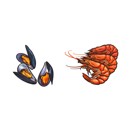 vector sketch cartoon sea crayfish lobster, mussels set. Isolated illustration on a white background. Sea delicacy food concept