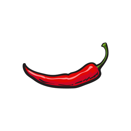 Single fresh whole ripe red chili pepper, sketch style vector illustration on white background. Realistic hand drawing of whole ripe red chili pepper, sketch style illustration