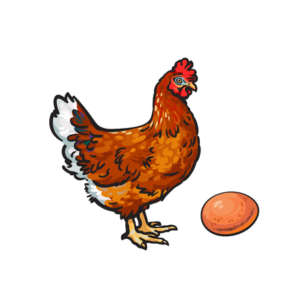 vector cartoon hand drawn sketch chicken hen and egg. Isolated illustration on a white background. Farm poultry rooster