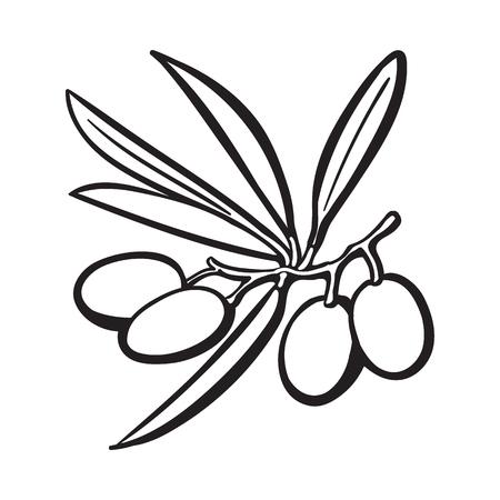 treatment plant: Olives black and white outline sketch style vector illustration on background. Illustration