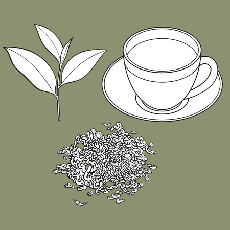 tea cup, fresh and dry leaves, sketch vector illustration isolated on white background.