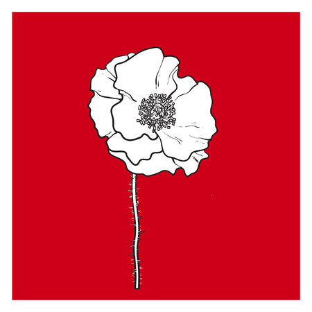 Vector black and white poppy flower blooming. Isolated illustration on a red background. Realistic hand drawn blossom with stem. Illustration