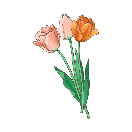vector tulip set isolated illustration on a white background. Flower bouquet with opened blooming blossom ,stem and leaves realistic hand drawn side view. Spring, love and care symbol