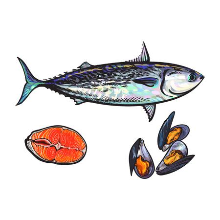 ベクター スケッチ漫画海魚マグロ、鮭赤魚の切り身、ムール貝のセット。白い背景に分離の図。海の珍味食品のコンセプト