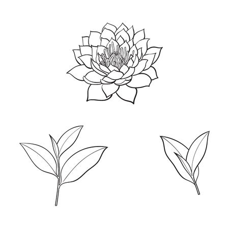vector sketch cartoon lotus flower blossom blooming, tea leaves branch set. Isolated illustration on a white background. Symbols of meditation, buddhism Sri-lanka and India