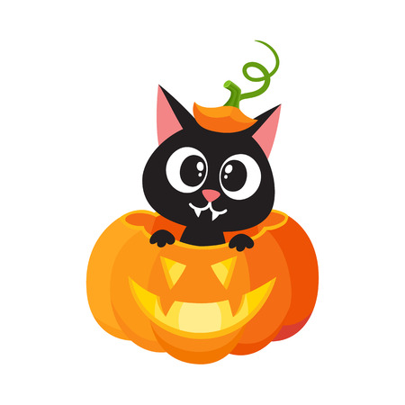 vector flat cartoon funny cute cat sitting at halloween scary pumpkin with gourd hat with stem on head smiling. Isolated illustration on a white background. Fancy animal concept
