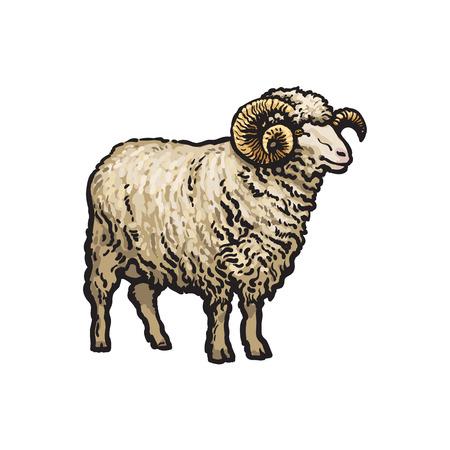 벡터 스케치 만화 스타일 horned ram입니다. 흰색 배경에 고립 된 그림입니다. 큰 트위스트 뿔 손으로 그린 동물입니다. 가축 농장 종아리 가축 동물 양모