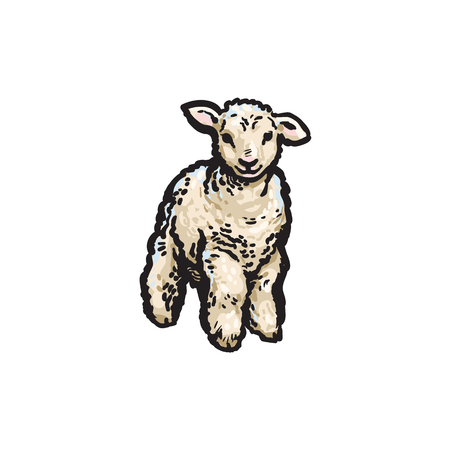 vector sketch cartoon style lamb. Isolated illustration on a white background. Hand drawn animal without horns. Cattle, farm cloven-hoofed livestock animal, wool, lamb products design object