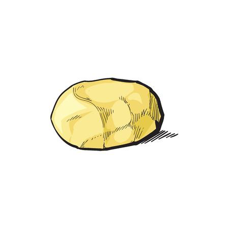 벡터 스케치 만화 익은 원시 껍질없이 노란 감자를 벗 겨. 흰색 배경에 고립 된 그림입니다. 야채 신선한 천연 제품, 건강한 라이프 스타일, 개념을 먹 일러스트
