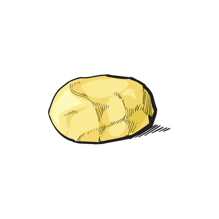 vector sketch cartoon ripe raw peeled yellow potato without peel. Isolated illustration on a white background. Vegetable fresh natural product, healthy lifestyle, eating concept Illustration