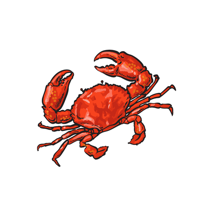 vector sketch cartoon sea crayfish crab. Isolated illustration on a white background. Sea delicacy food concept