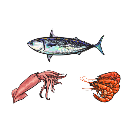 vector sketch cartoon sea crayfish lobster, squid and sea tuna fish set. Isolated illustration on a white background. Sea delicacy food concept