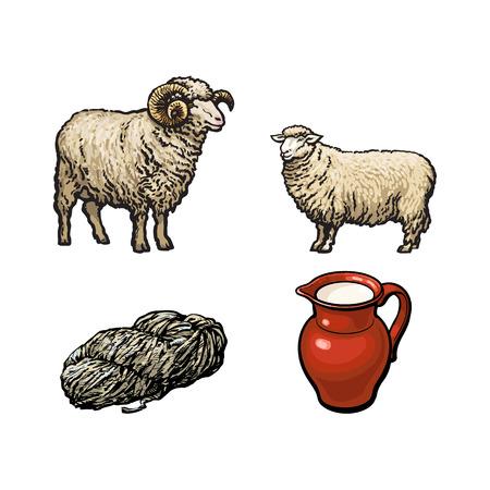 벡터 스케치 만화 스타일 horned 램, cutted 양고기 양모, 양 및 우유 용기 세트. 흰색 배경에 고립 된 그림입니다. 손으로 그린 축산 농장 가축 및 제품 일러스트