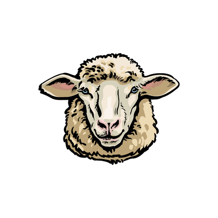 Front view sketch style portrait of domestic farm sheep, vector illustration on white background. Realistic hand drawing of ewe head, sheep breeding concept, milk meat and wool production symbol Vectores