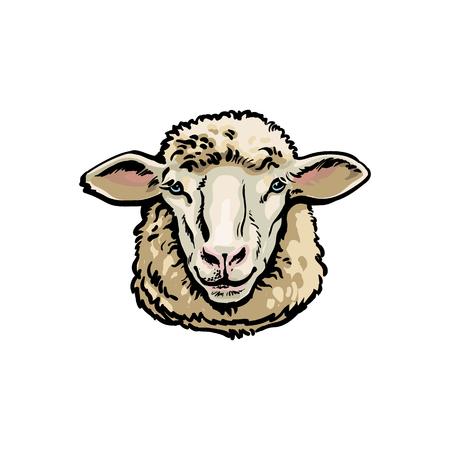 Vorderansichtskizzen-Artporträt von inländischen Bauernhofschafen, Vektorillustration auf weißem Hintergrund. Realistische Handzeichnung von Mutterschafkopf, Schafzuchtkonzept, Milchfleisch und Wollproduktionssymbol