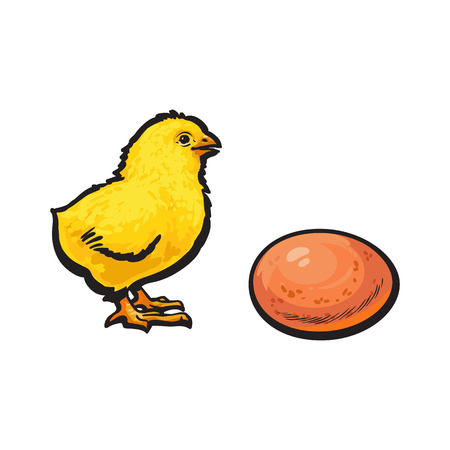 vector cartoon hand drawn sketch yellow color small chick and brown egg. Isolated illustration on a white background. Farm poultry chicken Illustration