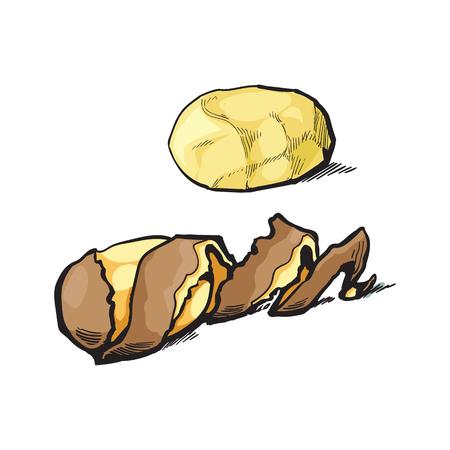 ベクター スケッチ漫画熟した生皮をむいた黄色いポテトのツイスト スパイラルの皮。白い背景に分離の図。野菜の新鮮な自然製品、健康的なライフ