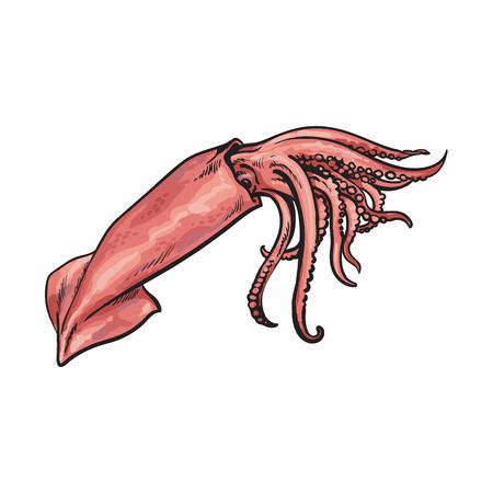 スケッチ漫画海イカをベクトルします。白い背景に分離の図。海の珍味食品のコンセプト